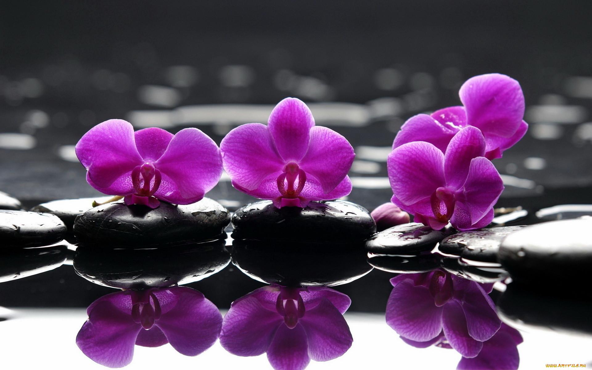 Высококачественные фото красивых цветов